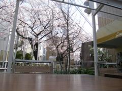 cafesakura.jpg